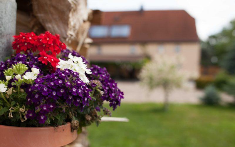 Eine Blume in der Pension bei Leipzig